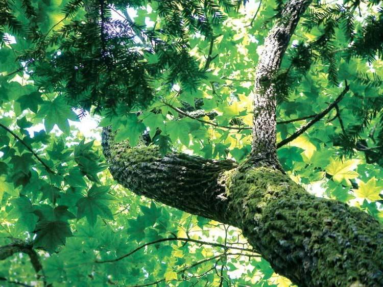 деревья приморского края фото названия надрезы районе